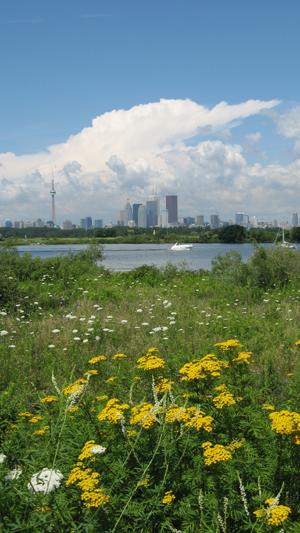 Toronto parmis les fleurs!