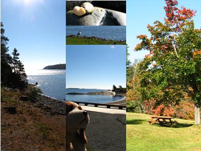 Parc au sud de Halifax