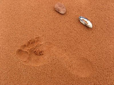 Empreinte de pas sur la plage Jacques Cartier