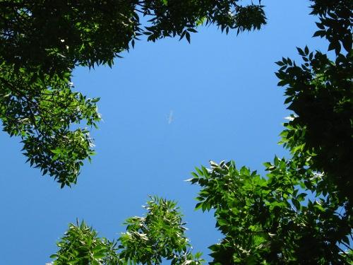 Des feuilles et des avions