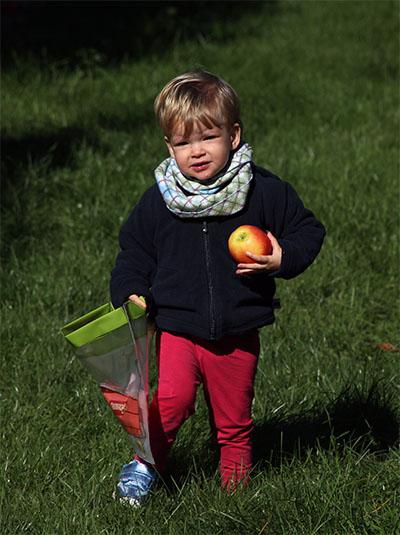 Apples5.jpg